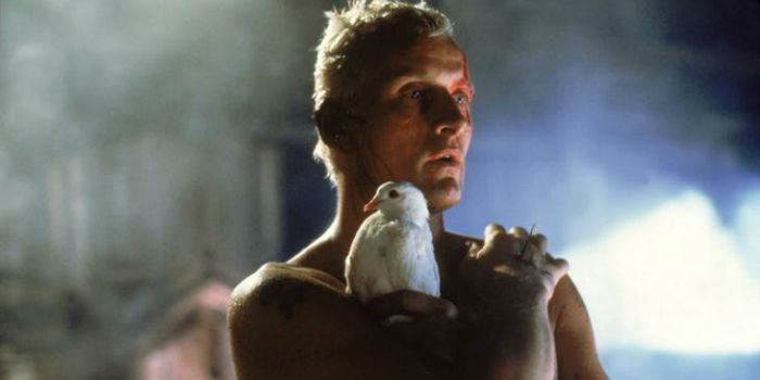Rutger Hauer as Roy Batty in Blade Runner w700